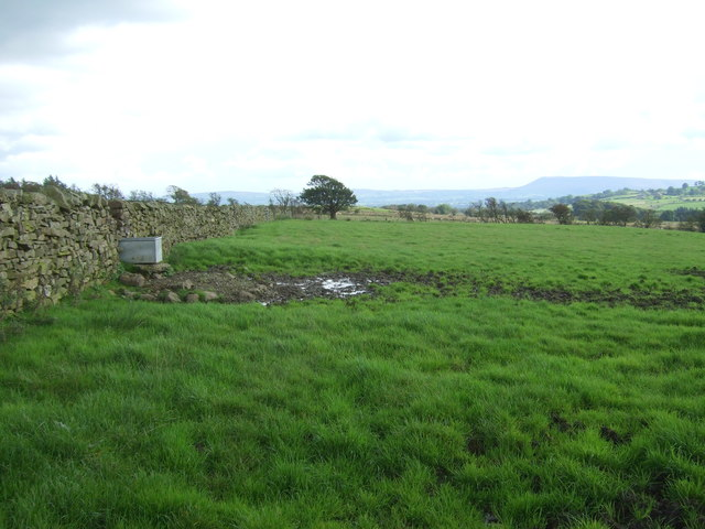 Grazing and stone wall