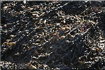 TA0225 : Seaweed on Hessle Foreshore by Chris