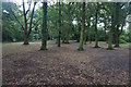 SU4412 : Freemantle Common by Bill Boaden