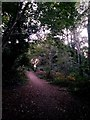 SZ1194 : Strouden: footpath K18 heads uphill by Chris Downer