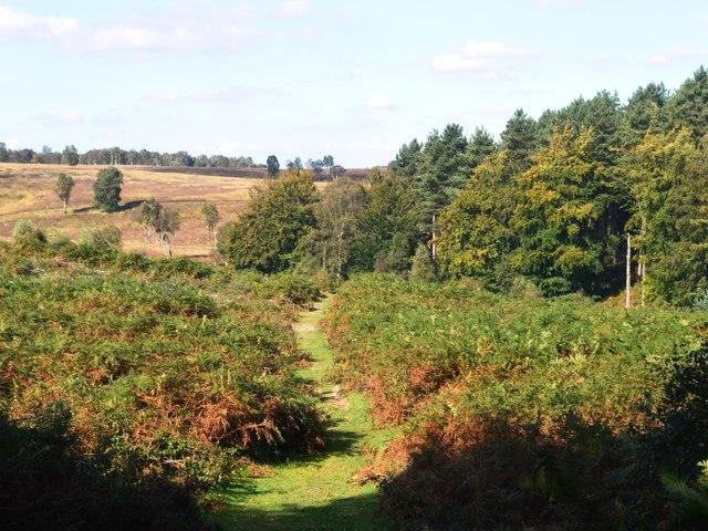 Restored heathland
