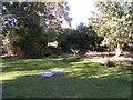 SZ0187 : Brownsea Deer by Gordon Griffiths
