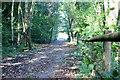 ST1799 : NCR 467 towards Fairoak Farm by M J Roscoe