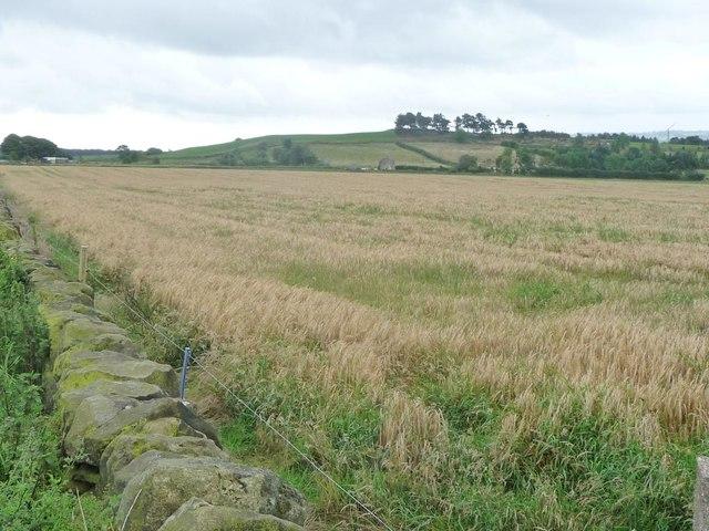 Barley field, west of Holestone Gate Road