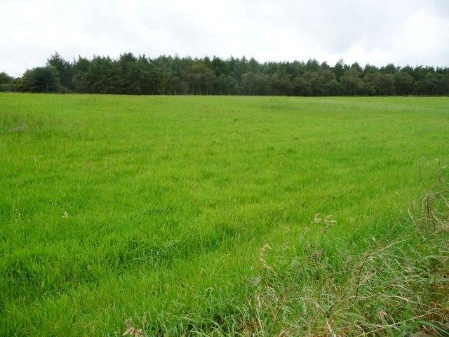 Bottom Moor, west of Wirestone Lane