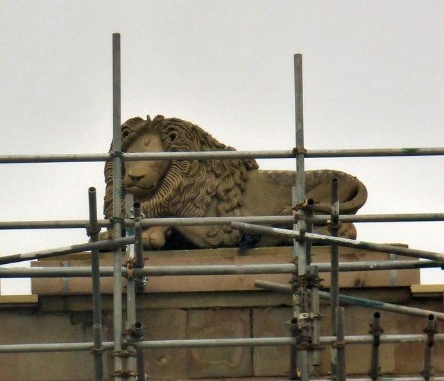 Council lion