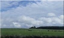 NY8693 : Farmland by the A68 by Anthony Parkes