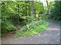 SO6855 : Woodland path on the Brockhampton Estate by Philip Halling