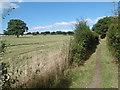 TQ2393 : Path to Totteridge Common by Marathon