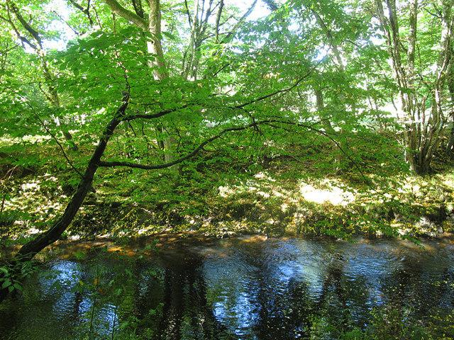 River Teign near Sowton Mill