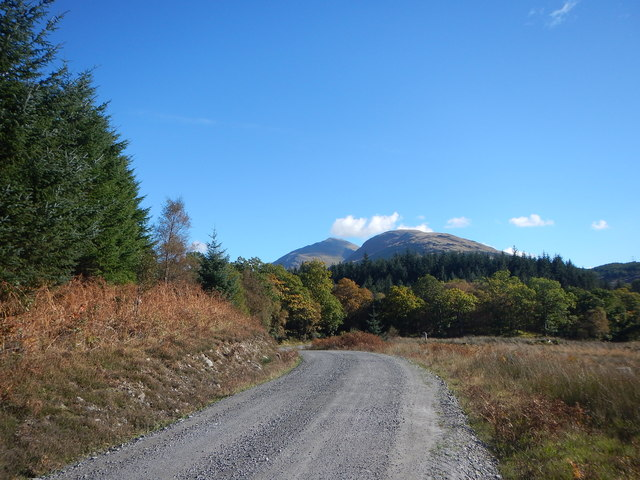 Conifer and deciduous woodland