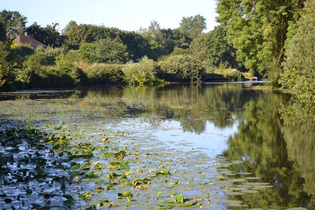 Water lilies on the River Avon, southeast Warwick