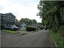 ST5294 : Piercefield Avenue, Chepstow by David Purchase