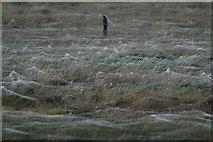HP6312 : Spiders' webs in a field beside Haroldswick pool by Mike Pennington