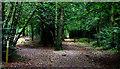 SU9196 : Penn Wood junction of paths by Robert Eva