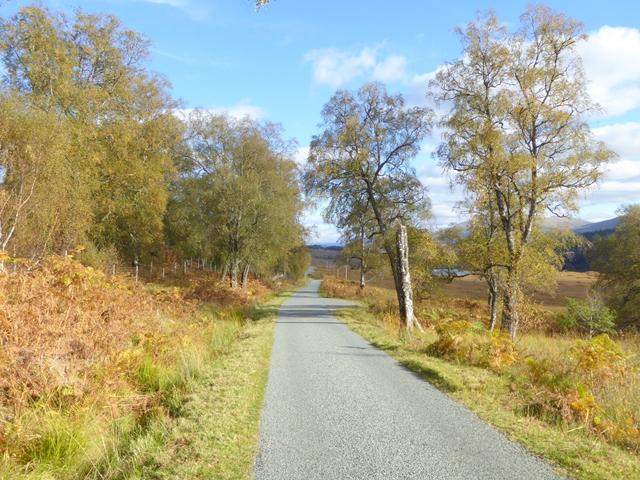 Birch trees beside the road in Glen Garry