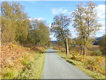 NH1101 : Birch trees beside the road in Glen Garry by Oliver Dixon