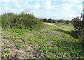 TR3259 : Looking ESE along a former railway embankment by John Baker