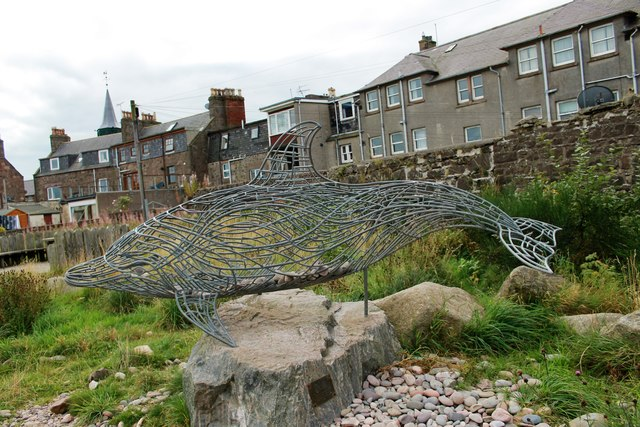 Wire Dolphin