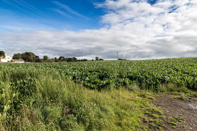 Farmland south of the R619