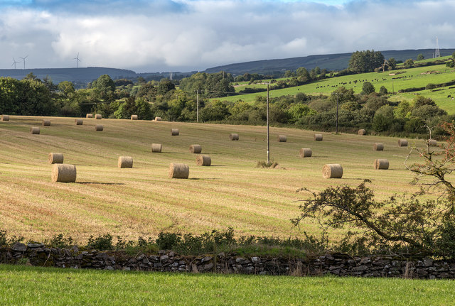 Bales in a field near Aghabullogue