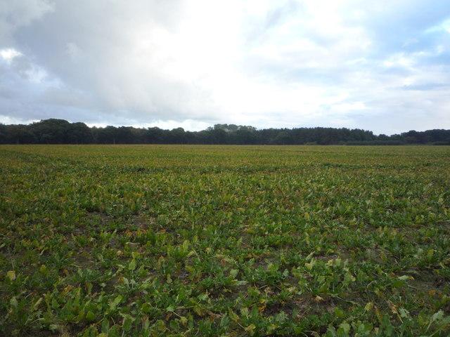 Crop field, Benacre