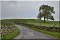 NY5017 : Road ending and tree on Winder Hill by Nigel Brown