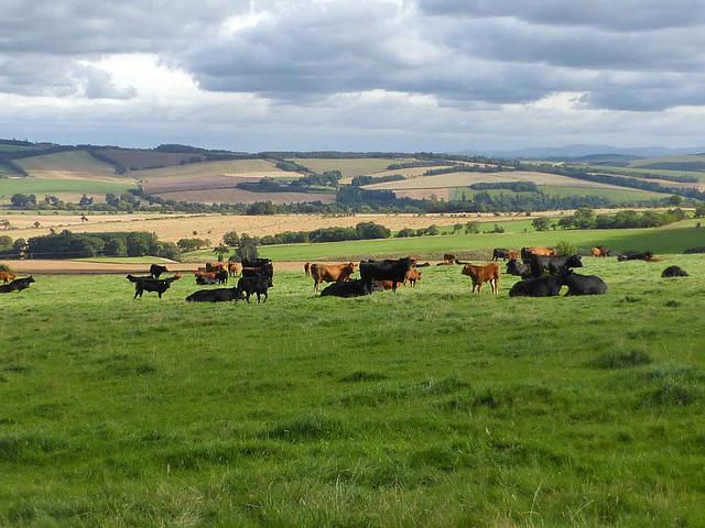 Farmland at Woodheads