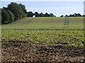 SU4242 : Field next to the Andyke by Nigel Mykura
