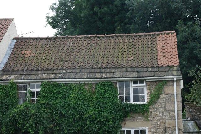 Ivy clad walls