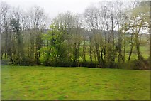 SX1061 : Trees lining the River Fowey by N Chadwick