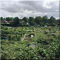 SP1194 : Allotments between the railway and The Boulevard, Wylde Green, Birmingham by Robin Stott