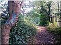SZ1094 : Strouden: graffitied tree on footpath K05 by Chris Downer