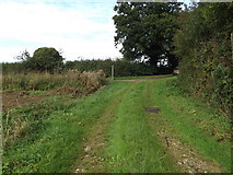 TM1787 : Prangle Lane Bridleway to Lodge Road by Adrian Cable