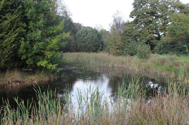 Large pond, Pant-ysgawen