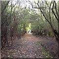 SP7533 : Paths around Thornborough by Dave Thompson