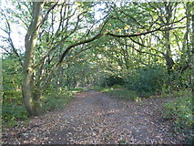 SJ8149 : Wood Lane: footpath to Apedale Country Park by Jonathan Hutchins