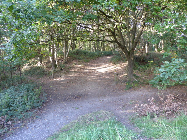 Path junction near Wood Lane