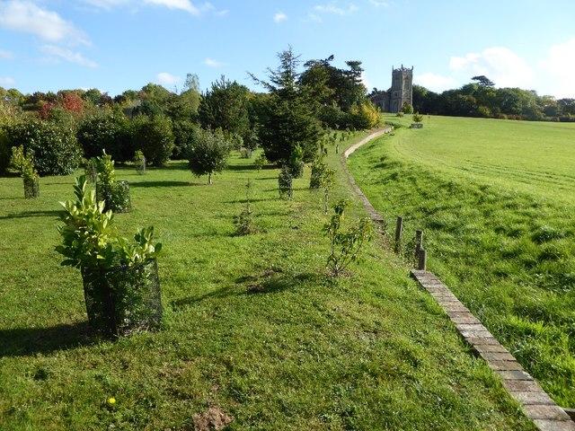 The Evergreen Shrubbery and ha-ha, Croome Park