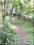 SN0105 : Woodland path near Bank Farm by Gordon Hatton