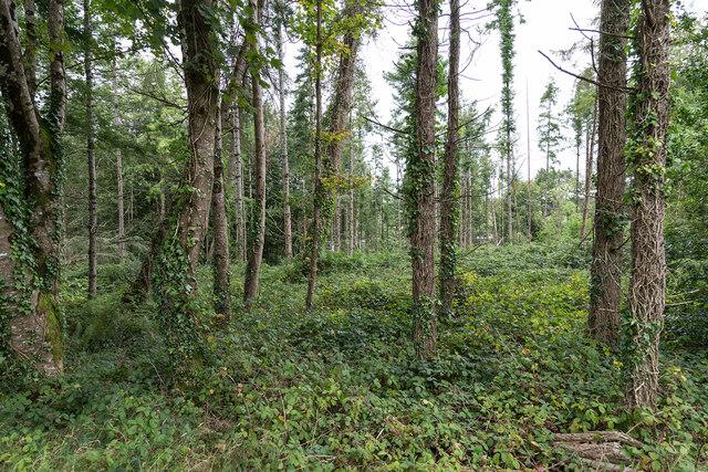 Farran Forest Park