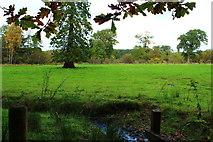 NS5420 : Farmland, Dumfries House Estate by Billy McCrorie