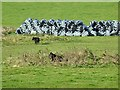 SK1561 : Cows and tumuli by Ian Calderwood