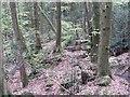 SO5204 : Steep ground, Cuckoo Wood by Richard Webb