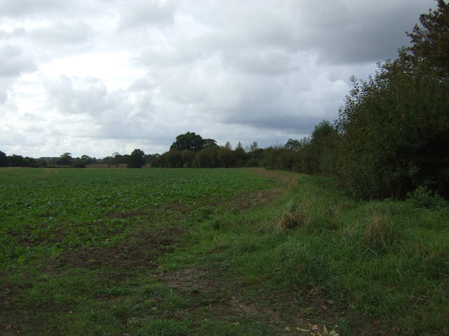 Crop field and hedgerow