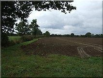 TM2490 : Farmland and hedgerow, Shelton Common by JThomas