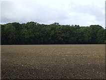 TM2089 : New Plantation by JThomas