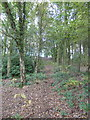 SJ8352 : Path through woods in Bathpool Park by Jonathan Hutchins