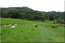 NY3404 : Footpath near Loughrigg Tarn by DS Pugh