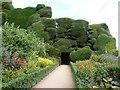 SJ2106 : Flower borders and sculptured Yew Trees, Powis Castle by Derek Voller